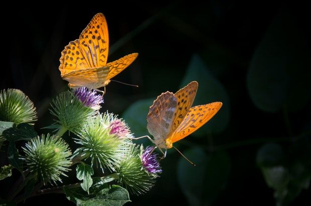 Sensational Butterflies exhibition at National History Museum